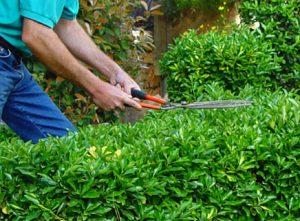 manter o jardim bonito
