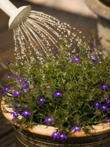 manter jardim bonito